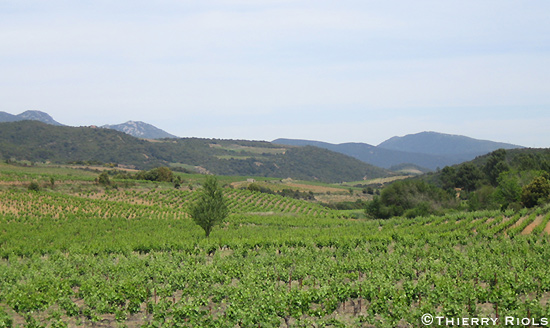 Vignoble de saint Chinian